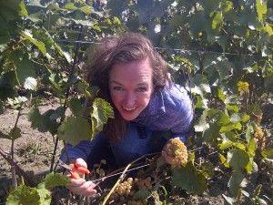 Debbie at 2012 harvest
