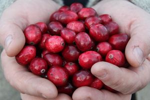 Johnston's Cranberries
