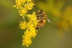 rew_honeybee(1)
