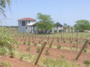 Greenlane estate