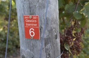 Gwertz_post sign (2)